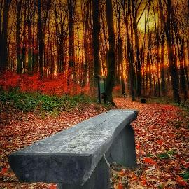 by Mario Pavlić - Nature Up Close Trees & Bushes