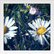 """Photo: I this found photo earlier today as I was combing through my archives for a project.  """"Daisies"""" in Seattle with iPhone 3Gs"""
