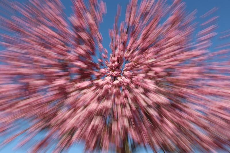 pink mood di manumanf
