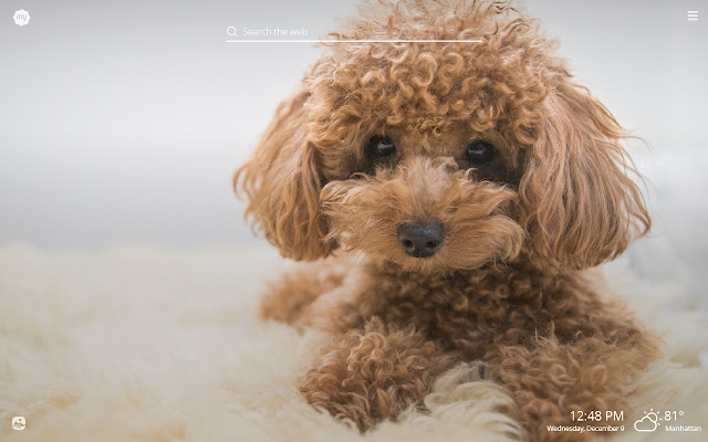 My Poodle HD Wallpapers New Tab Theme
