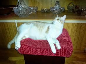 Photo: Dostaliśmy zdjęcia kocurka-Kaja, którego Pani adoptowała od nas przed rokiem. Maluch wyrósł na pięknego kocura ważącego ...uwaga 7KG :))) Dziękujemy ślicznie za fotki