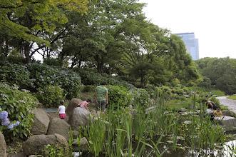 Photo: 南外堀地区西南部に広がるアジサイ園。(2014,06,08)