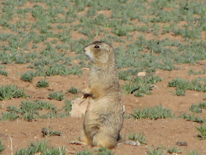 Photo: Prairie dogs were just outside our patio door but were hard to get close enough to photograph.