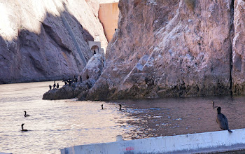 Photo: Cormorants congregate near the Arizona spillway tunnels.