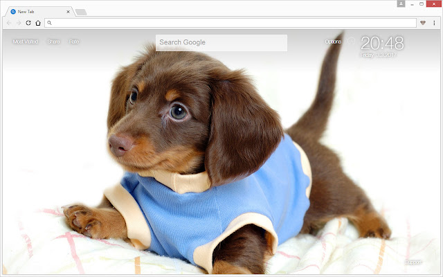 Dogs And Puppies Are Cute Install My Themes To Get HD Background Wallpapers Of Puppy Dog Everytime You Open A Newtab