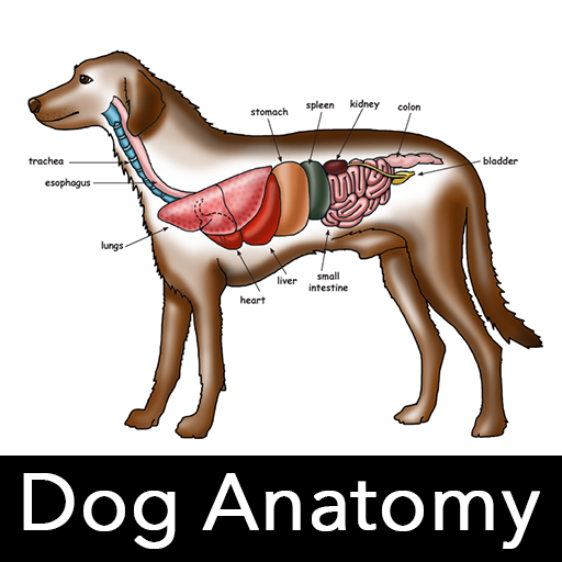 Dog Anatomy : Canine Anatomy