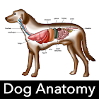 Dog Anatomy: anatomia canina icon