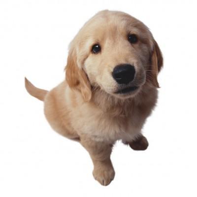 Consejos Para Perros