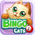 Bingo Cats apk