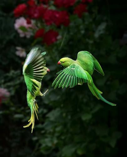 open air discussion by Ghislain Vancampenhoudt - Animals Birds