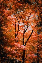 Photo: Autumn Whispers