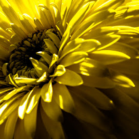 yellow by Zandro Rimando - Nature Up Close Flowers - 2011-2013