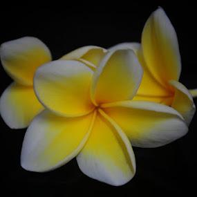 ~Kamboja~ by Re Rahnavarda - Nature Up Close Flowers - 2011-2013