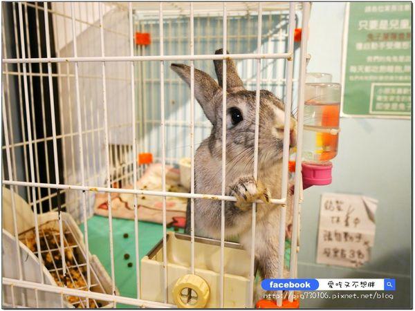 新北三重/美食 跟可愛兔子一起吃飯!泰國蝦義大利麵你吃過了嗎?超大份珍珠奶茶鬆餅這裡有!要來點兔子嗎?兔子寵物友善餐廳