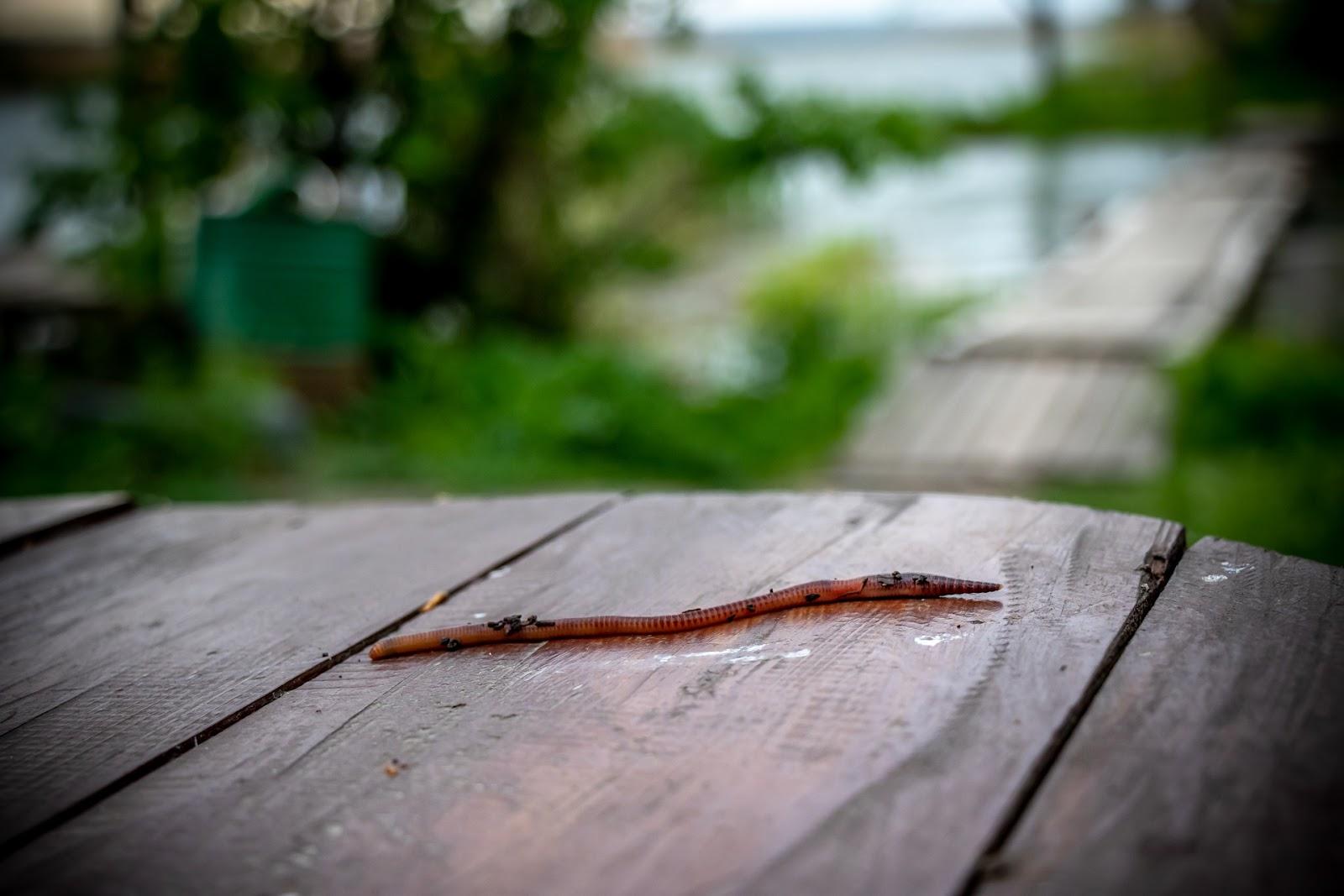Earthworm microfauna
