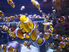 Photo: Two Oceans Aquarium