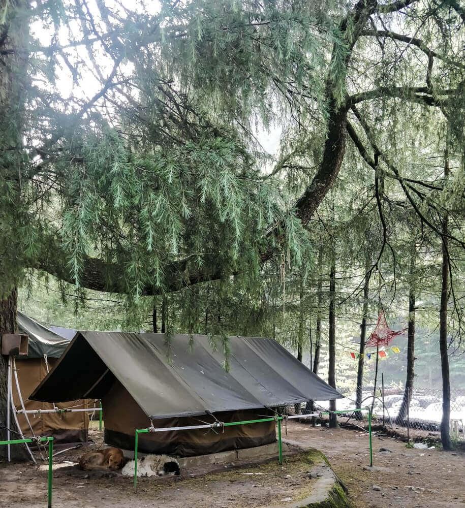 riverside+kasol+camps+dogs+kasol+manali+parvati+valley+himachal