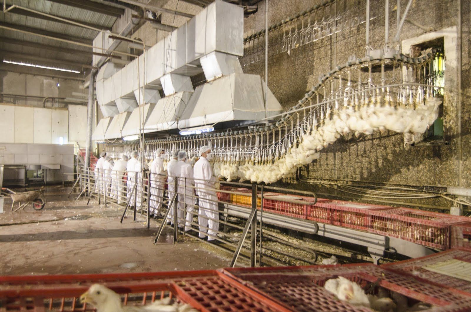 Factory Farming Fast Food