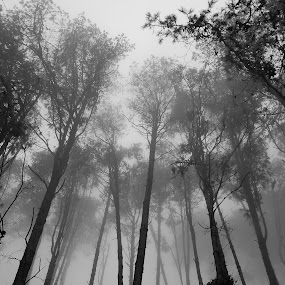 Mist in the Cedars by DJ Cockburn - Nature Up Close Trees & Bushes ( grayscale, zomba, monochrome, black and white, silhouette, cloud forest, trees, cypress, widdringtonia whytei, cedar, malawi, mist,  )