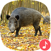 Appp.io - Wild Boar Sounds