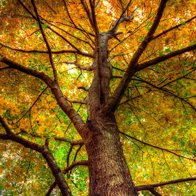looking up by Fraya Replinger - Nature Up Close Trees & Bushes ( orange, nature, tree, green, yellow,  )
