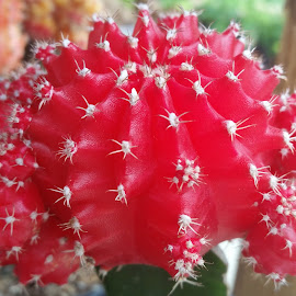 Ref Cactus plant  by Maricor Bayotas-Brizzi - Nature Up Close Other plants (  )