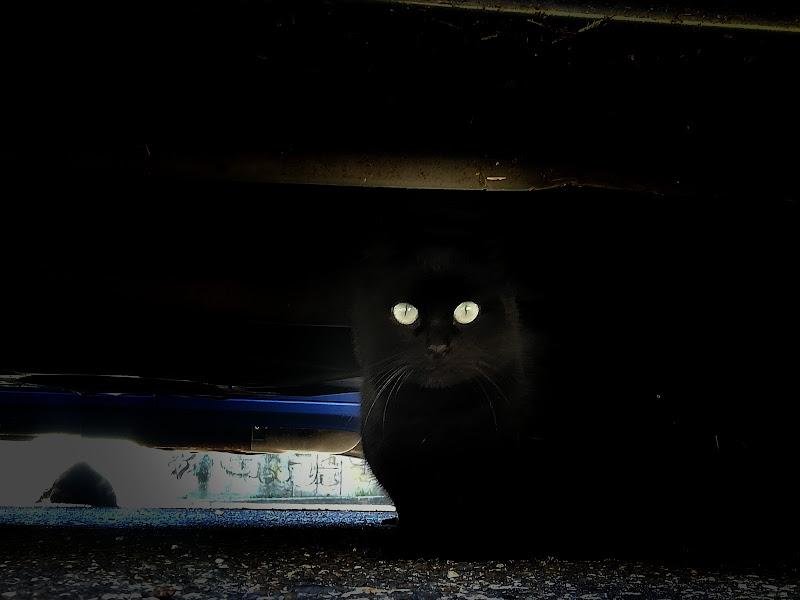 Il gatto  di Lulu77