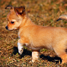 by Ahmad Torabi - Animals - Dogs Puppies ( pwcpuppies )
