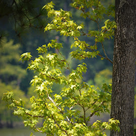 Lake house view by Rhonda Kay - Nature Up Close Leaves & Grasses