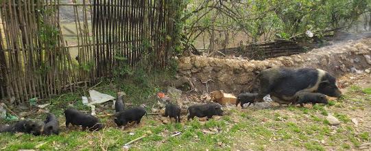 Photo: pig family