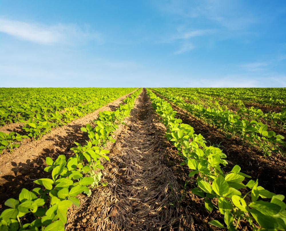 O atraso da colheita de soja atrapalhou os planos de vários produtores brasileiros. (Fonte: Shutterstock/sondem/Reprodução)
