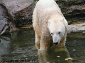 Photo: Das Wasser ist doch zu verlockend ;-)