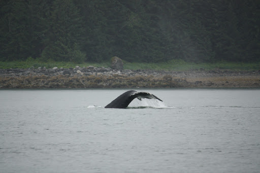 IMG_1605 - More whale watching