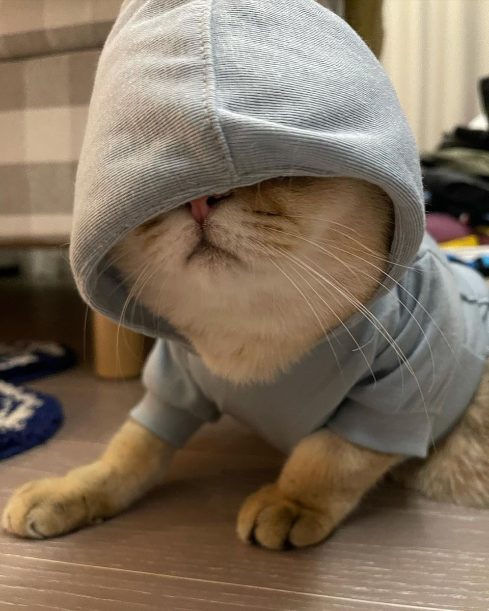 lisa cat3