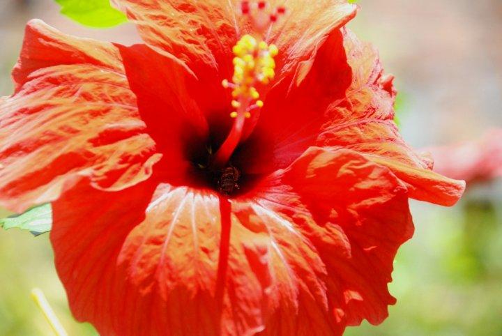 Curiosando dentro un fiore di michele.pautasso