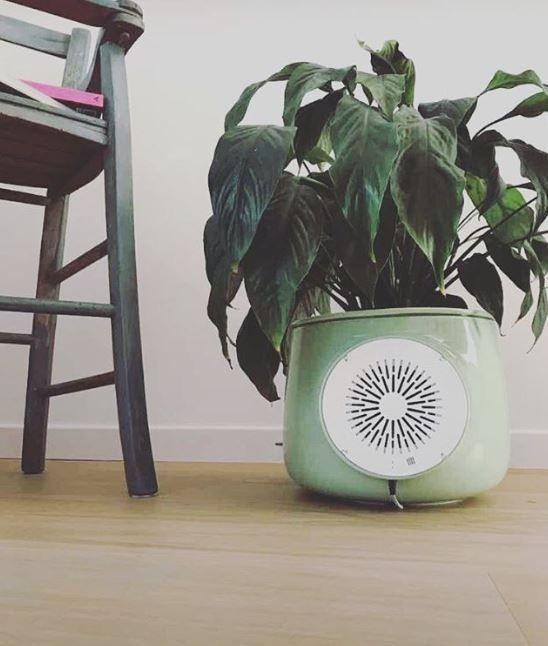 Intelligent Vase