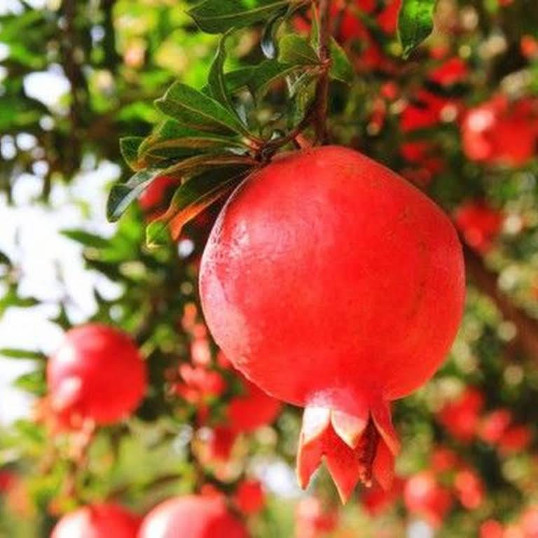 Aiswarya Gardens Mannuthy Thrissur - Nurserys in thrissur   Plant