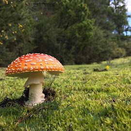 In the rough at the golf course by Steve Banton - Nature Up Close Mushrooms & Fungi
