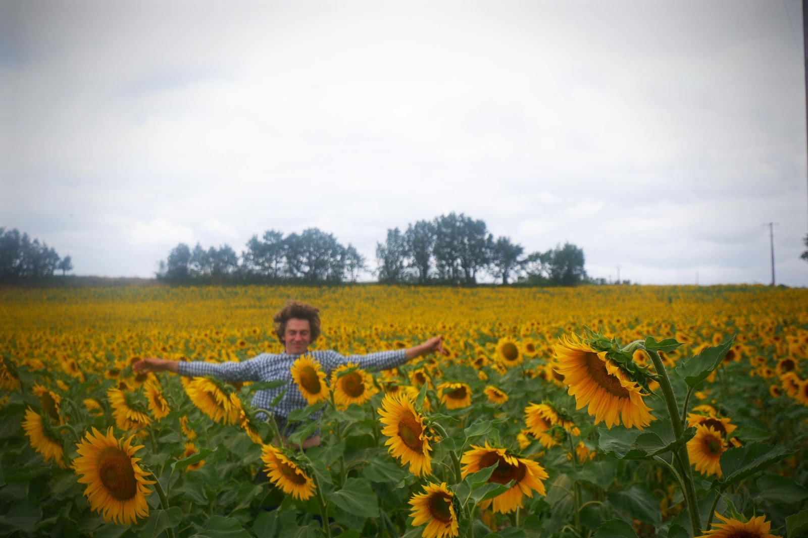 G-DRIVE with Thunderbolt:photos:press photos:sunflower field.jpg