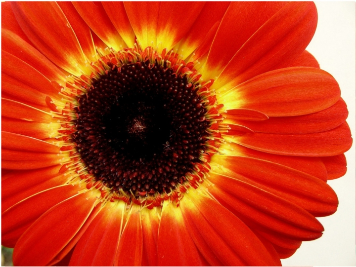 Orange.. di Astrid Tomada