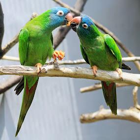 share by Dhannie Setiawan - Animals Birds ( sharing, green, friendship, wildlife, birds, friend, animal )