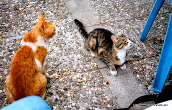 Photo: Troodos gebergte. Kykko klooster. Bedelkatten | Troodos mountains. Kykko Monastery. Cats begging.