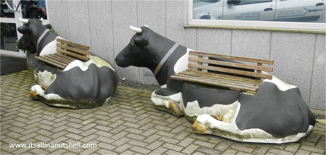 cow benches
