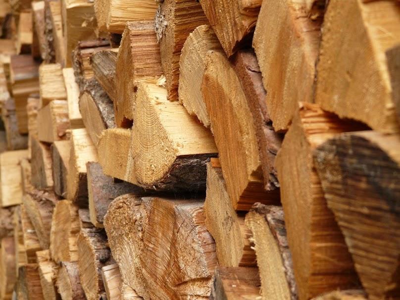 Cały szereg innych owadów może wprowadzić się do naszego domu, jeśli drewno zostanie uprzednio uszkodzone przez grzyby.