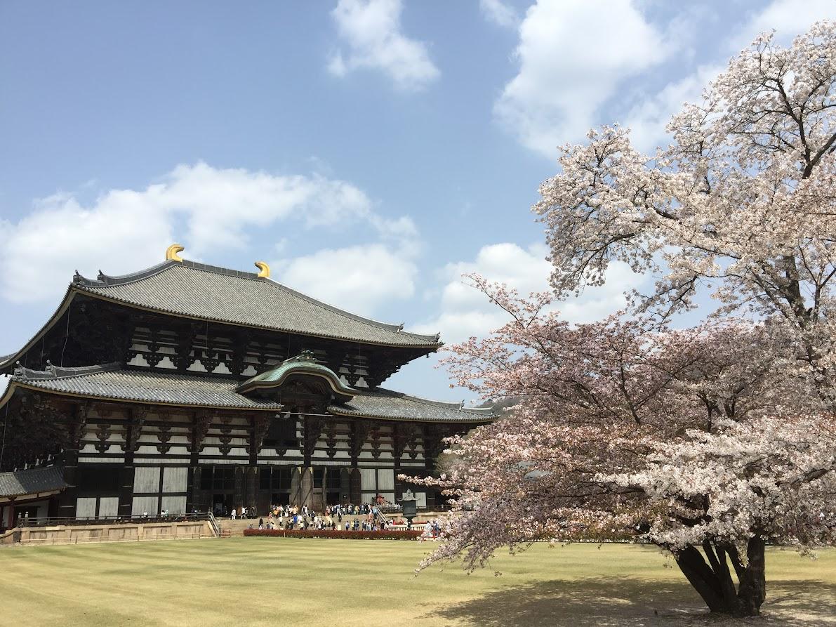 桜満開の東大寺