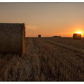 After harvest by Vanja Vidaković - Landscapes Prairies, Meadows & Fields