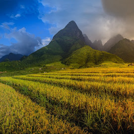 Rice fields on terraced with Mount Fansipan background at sunset by Nuttawut Uttamaharach - Landscapes Mountains & Hills ( haze, mountain, valley, travel, house, landscape, asian, farm, sky, nature, tree, village, fresh, asia, sapa, lao, misty, china, hill, rice, green, beautiful, agriculture, forest, vietnam, field, landmark, terrace, environment, season, mount, fog, jungle, sunset, background, terraced, view, scenery, asean, fansipan, mist )