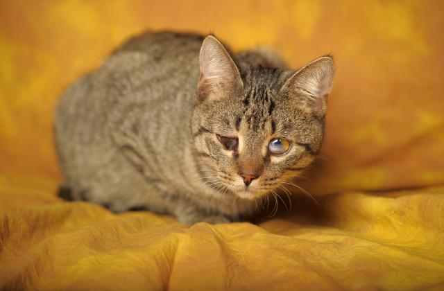 mèo bị đau mắt có thể do bụi bẩn