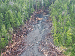 Photo: Recent mass wasting on forested slope