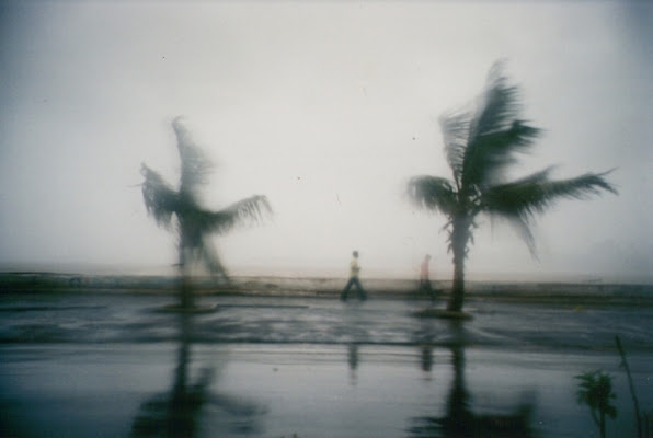 MONSOON AND TREES di MicAless